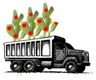 phytoextraction truck