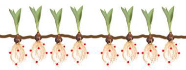 phytostabilization multiple